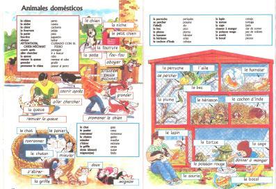 animaux-domestiques-susaeta